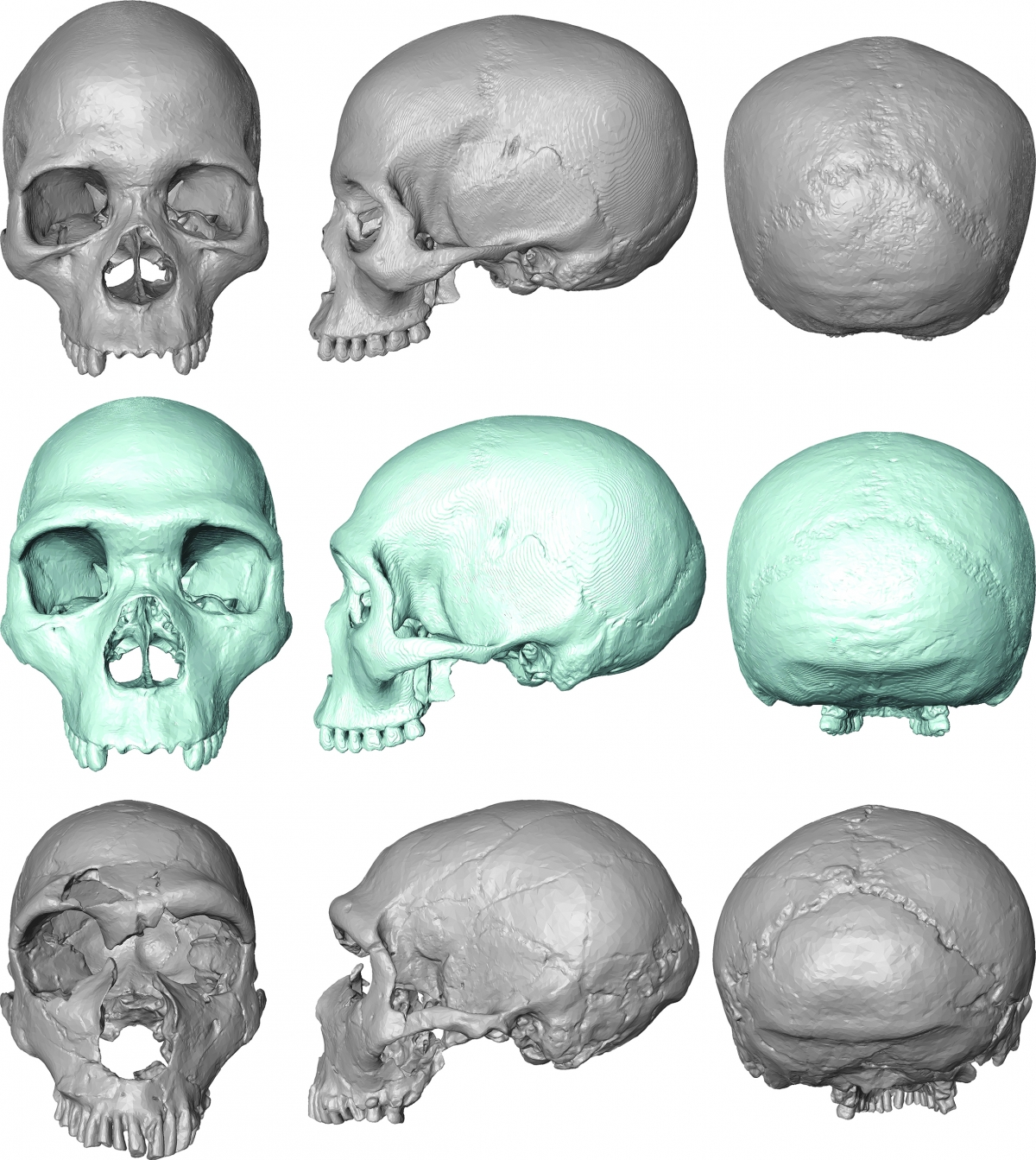 virtual fossils
