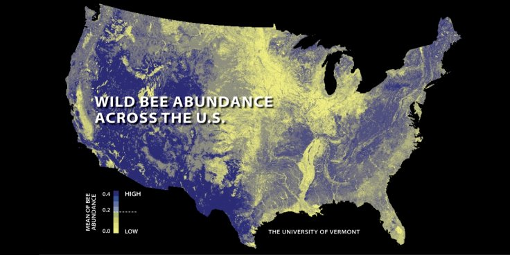 US Bee Abundance