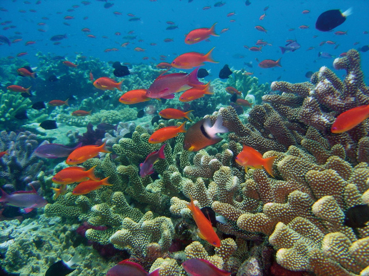 Coral reefs need turbidity