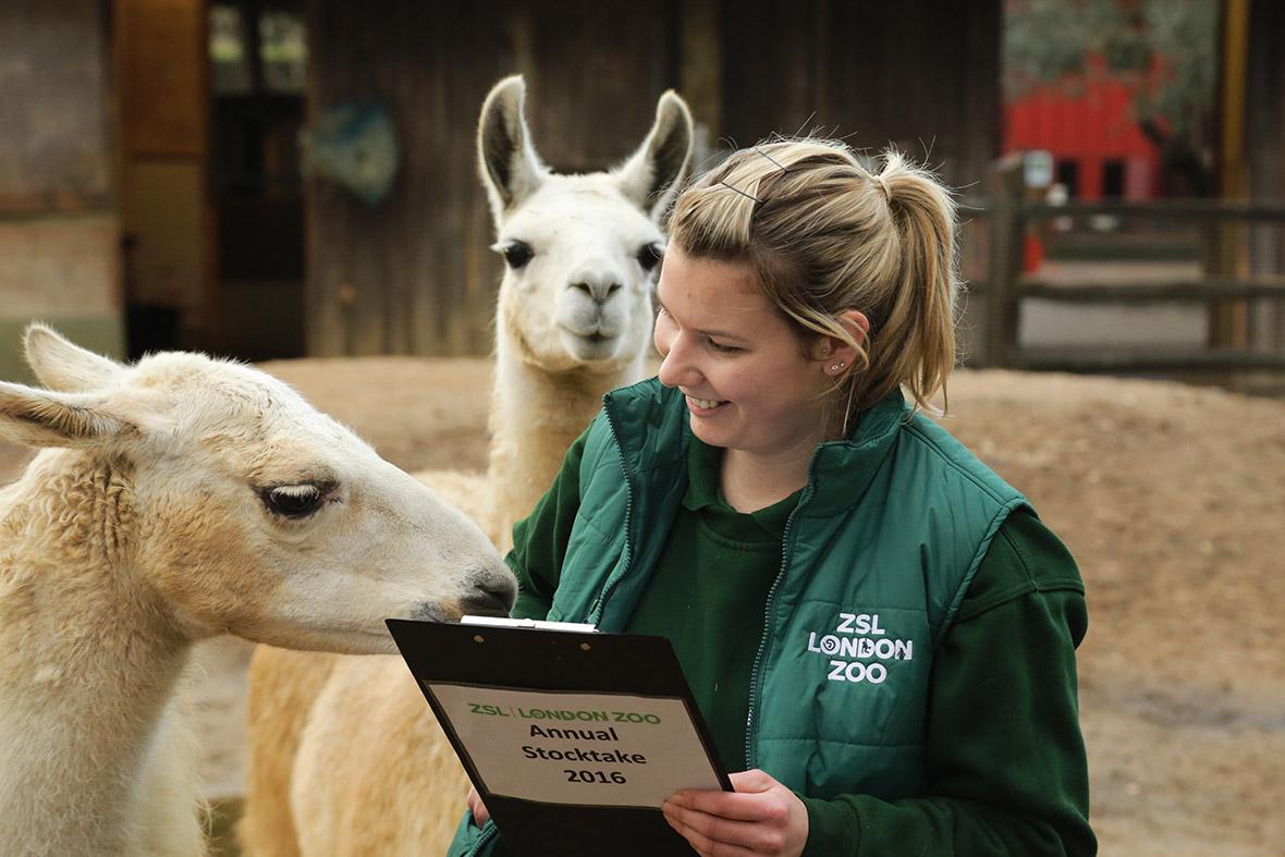 London Zoo stocktake