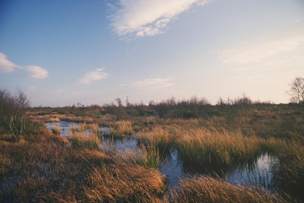 Wet peatland