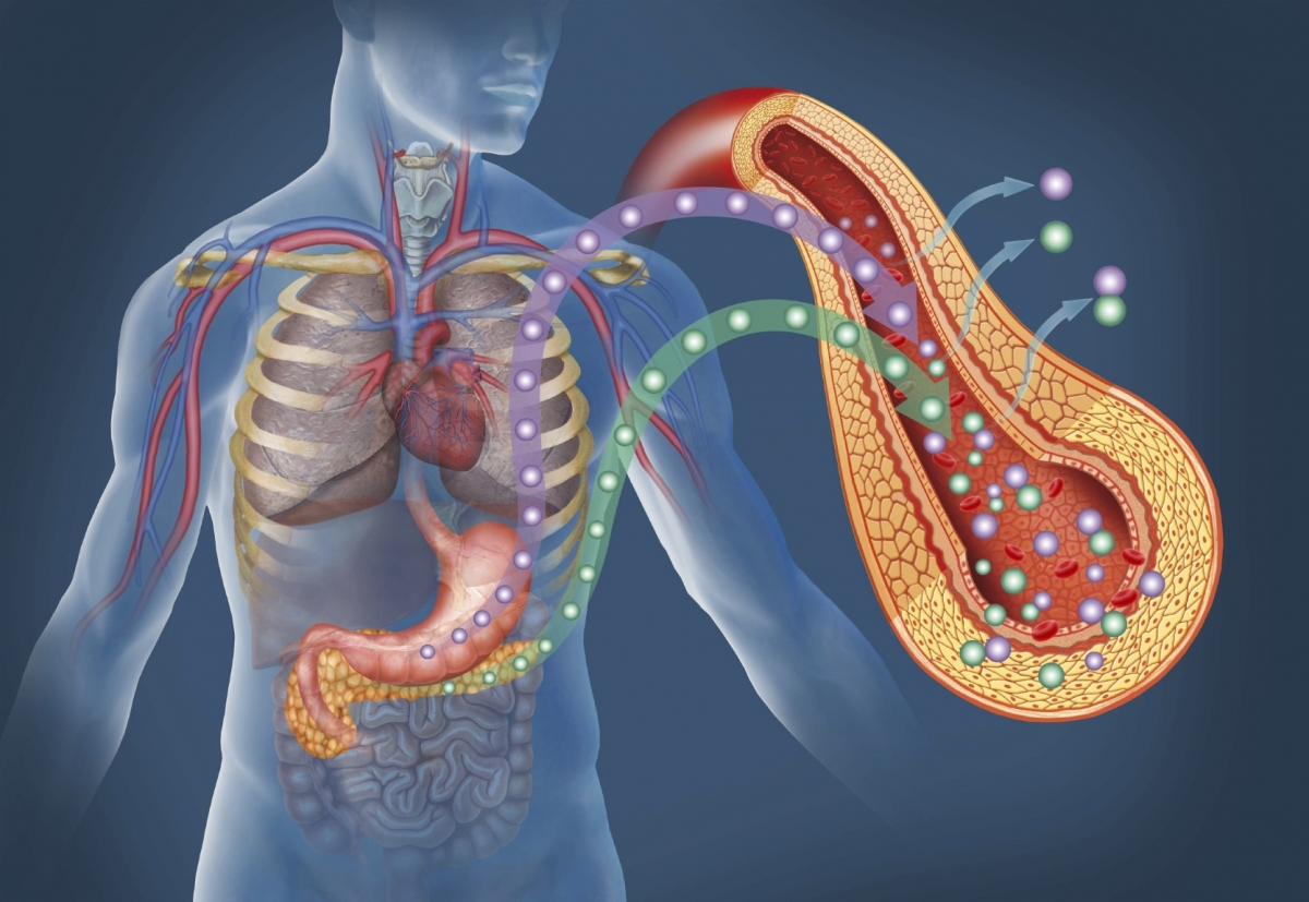 Insulin in the pancreas