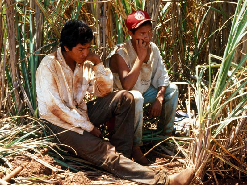 Guarani Kaiowá people of Brazil