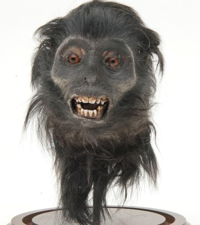 George Bush avoids jail for selling monkey skulls on eBay