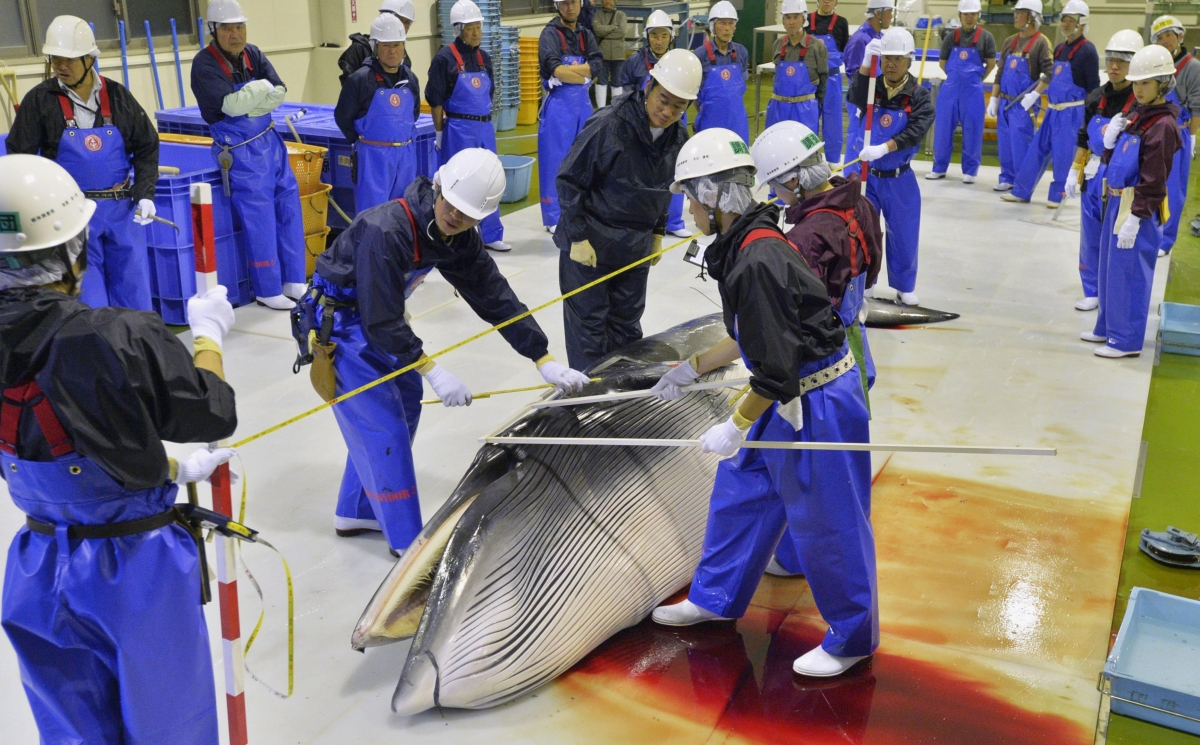 an overview of the controversial practice of commercial whaling Potential biological removal and other currently used management rules for marine mammal populations: a comparison.