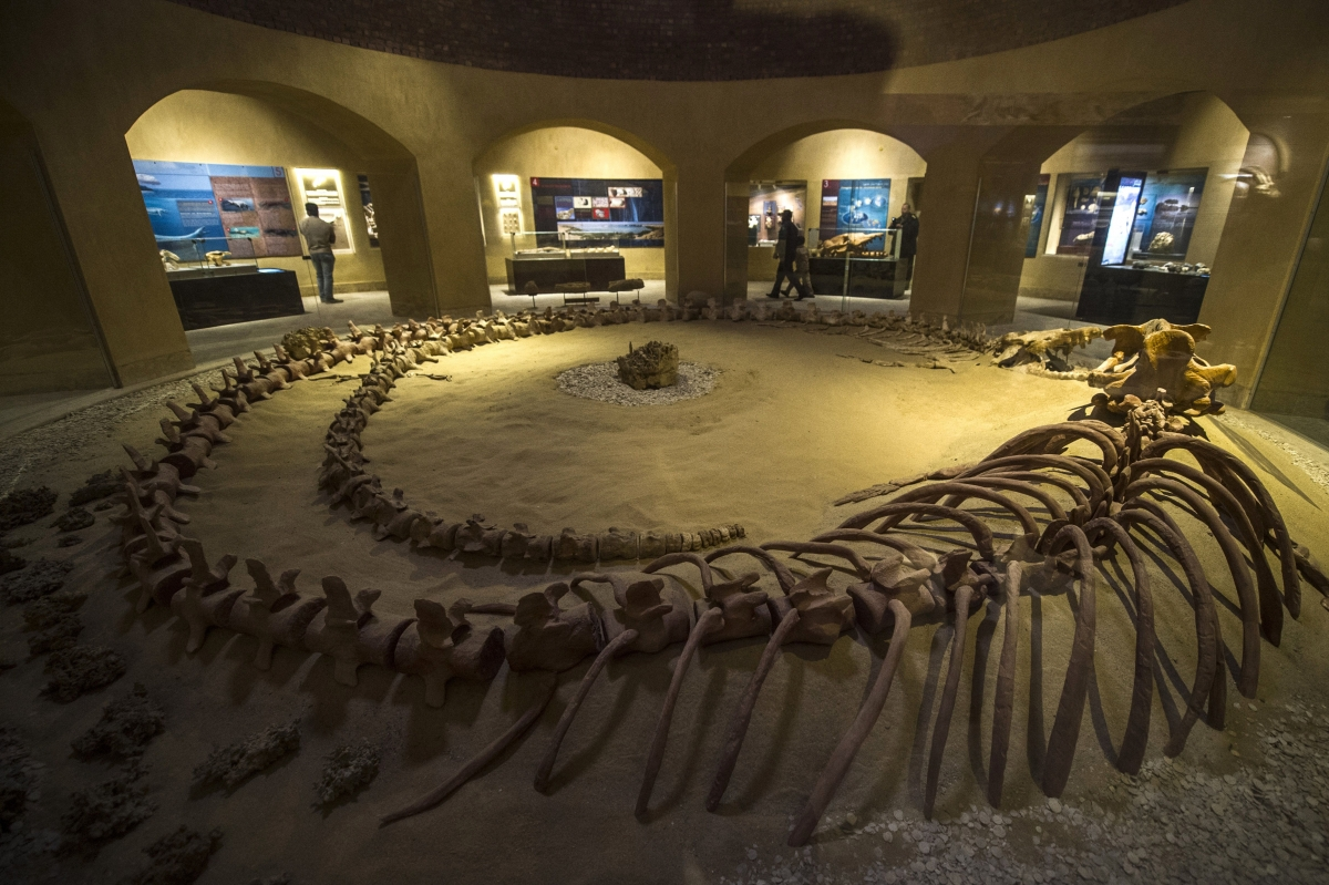 Whale fossils museum