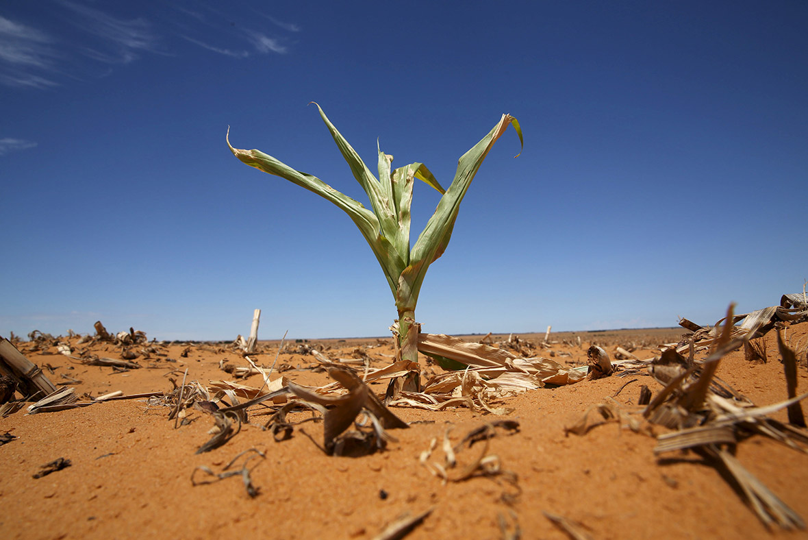 South Africa: Crops fail and people die from heatstroke as ...