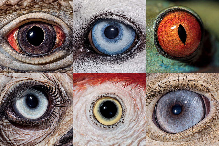 eyes wide open  national geographic takes a fascinating