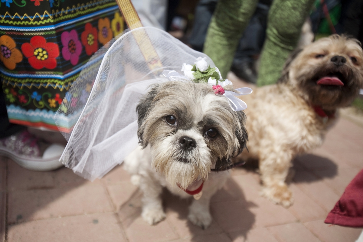 boy marries dog