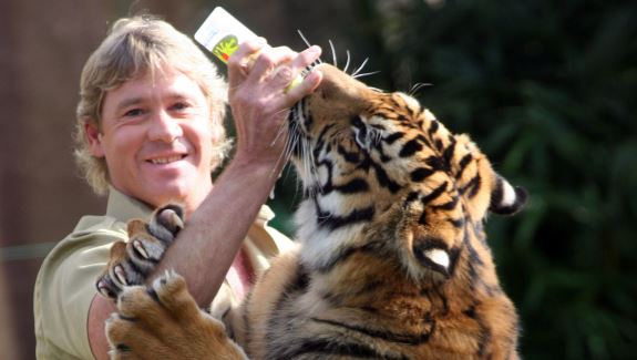 Steve Irwin: Zookeeper mauled in the face by a tiger at ...