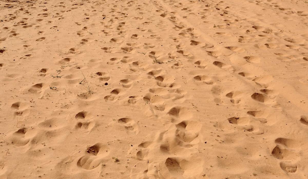 foot prints ( Representative picture )
