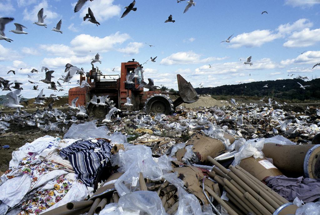Birds on landfill