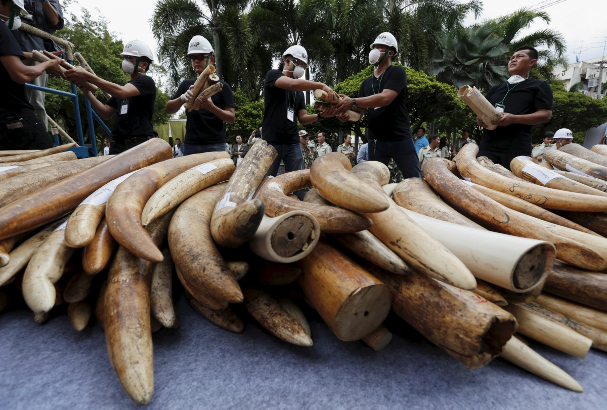 Yahoo Japan selling elephant ivory