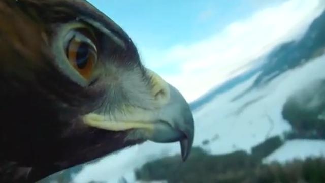 Eagle-mounted camera