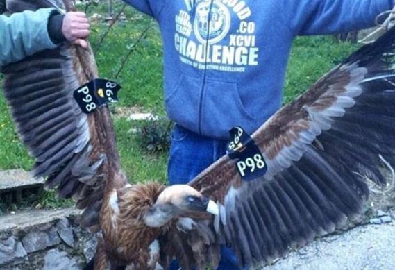 Israeli spy-vulture