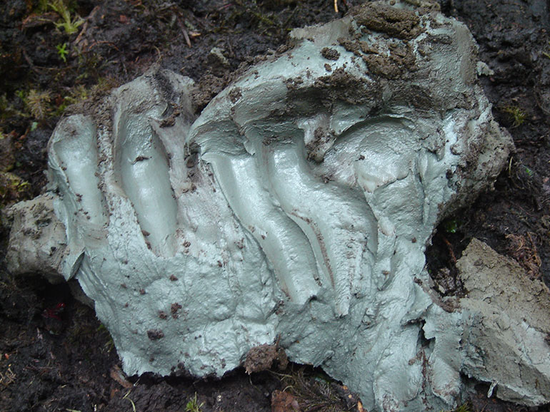 Rare Prehistoric Mineral Clay Found In Canada Could Treat