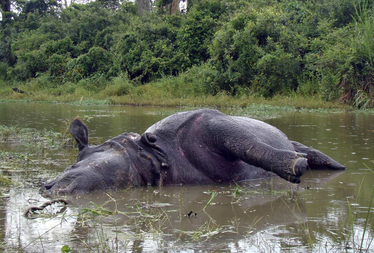 Kaziranga National Park rhino poaching