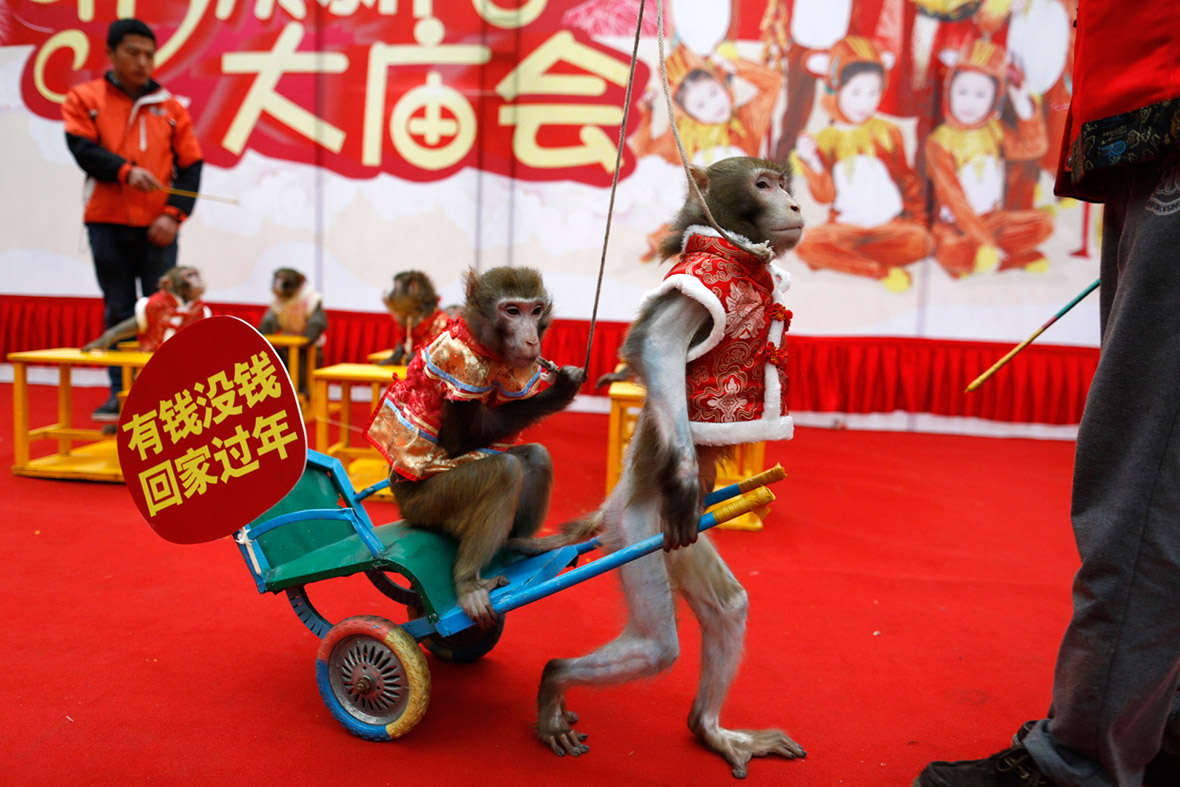 China Year of the Monkey