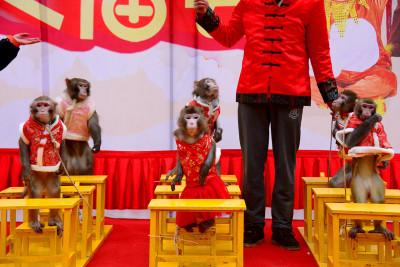 China Year of the Monkey