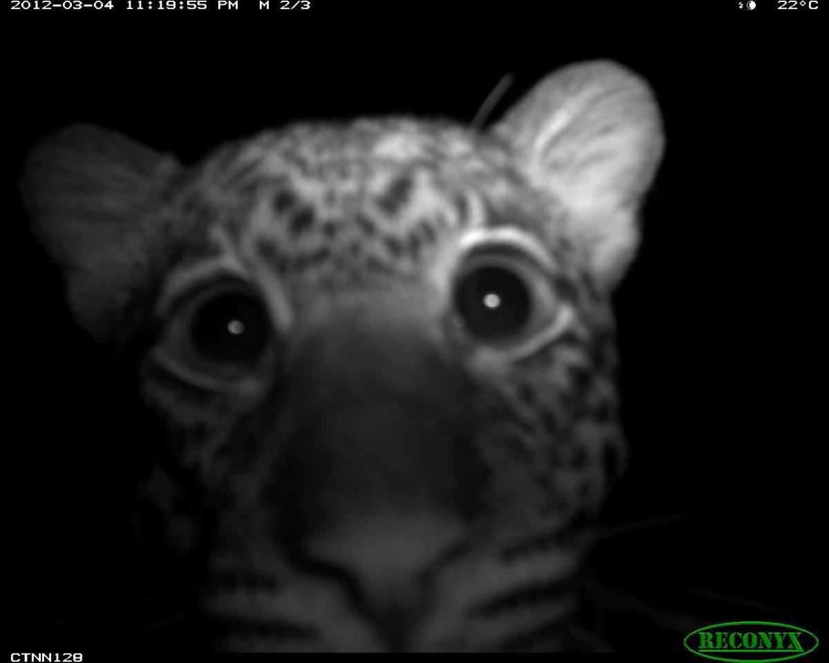 Leopard selfie