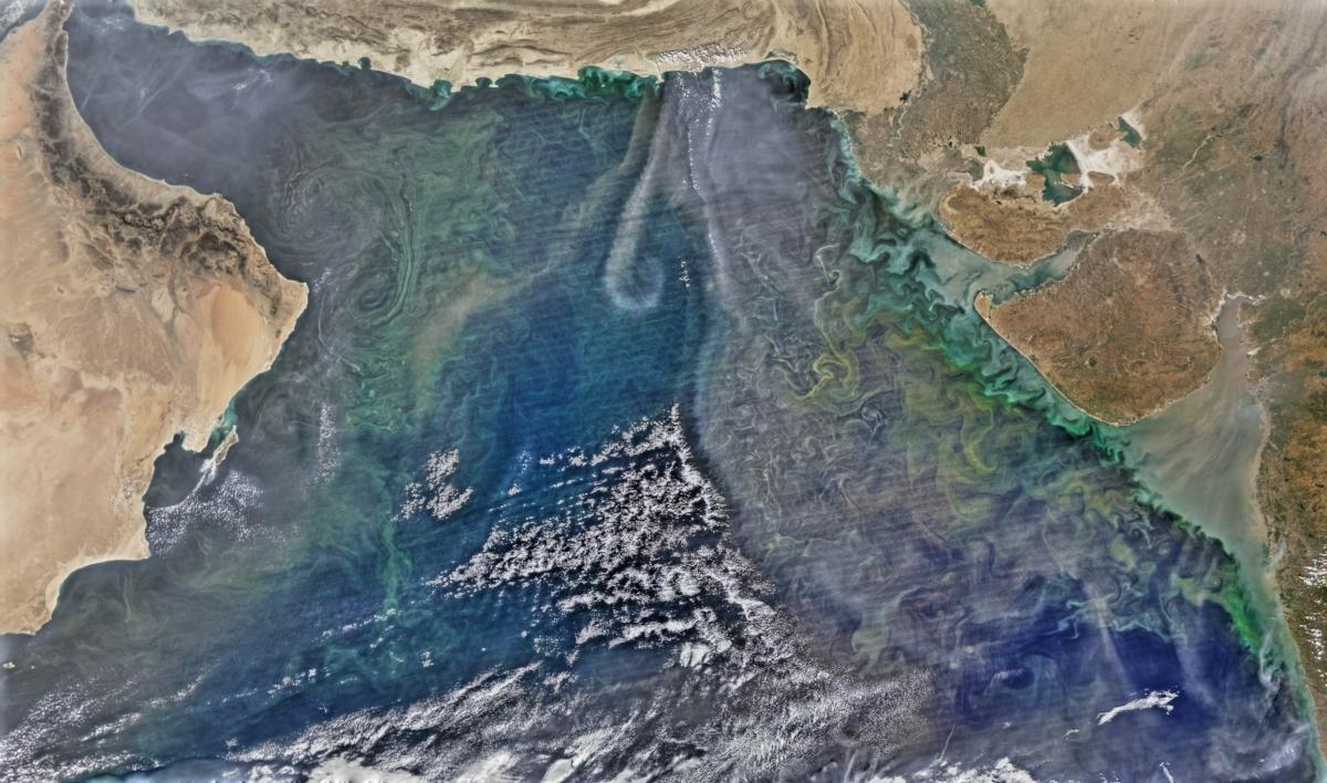 Plankton bloom arabian sea