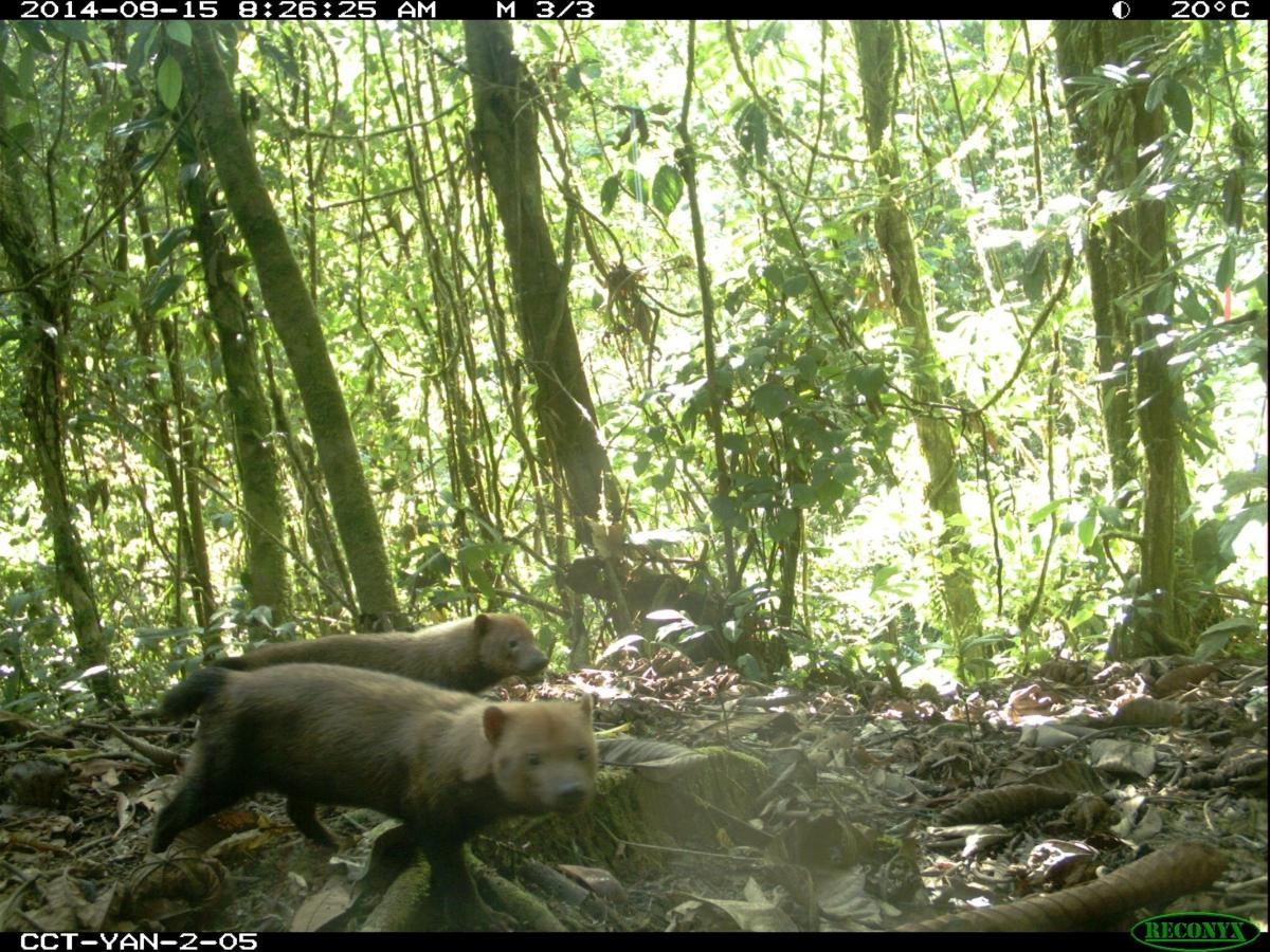 Bush dog selfie