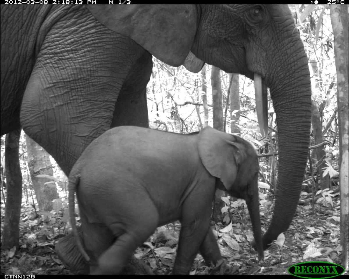 Elephants selfie