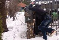 Bear wrestles with man