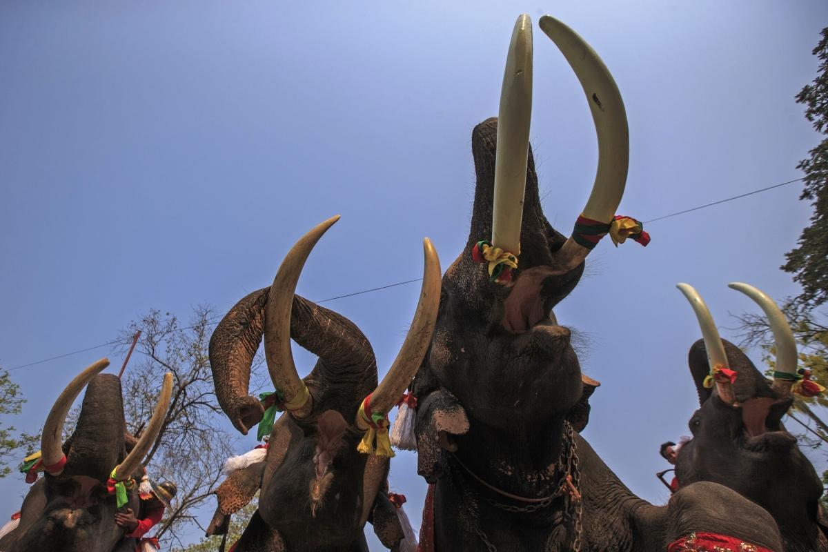British tourist killed by Thai elephant