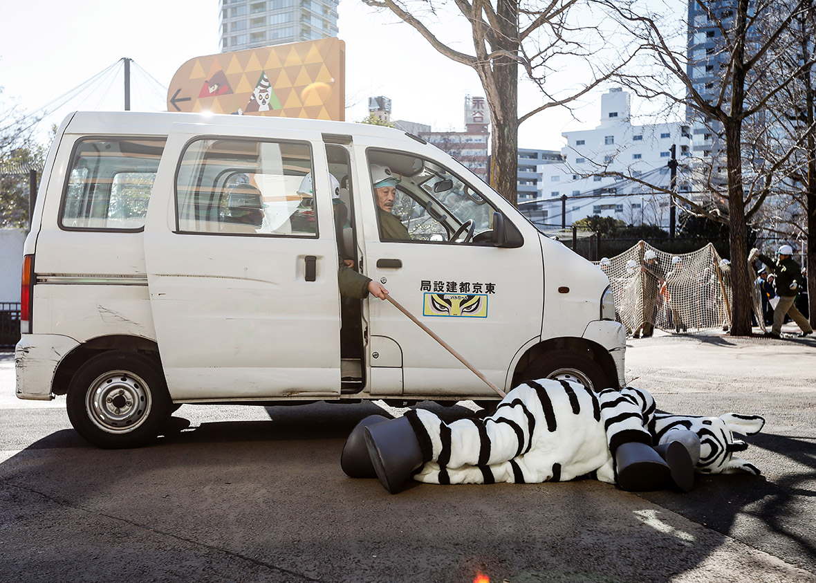 zookeeper drill, tokyo