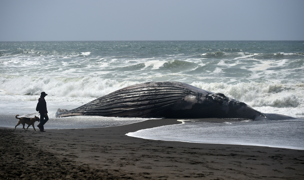 Stranded whale