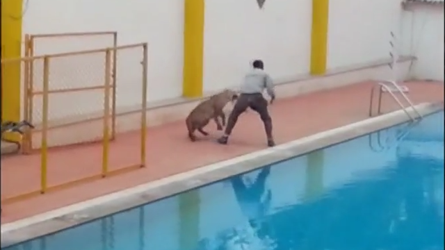 Leopard attacks a man