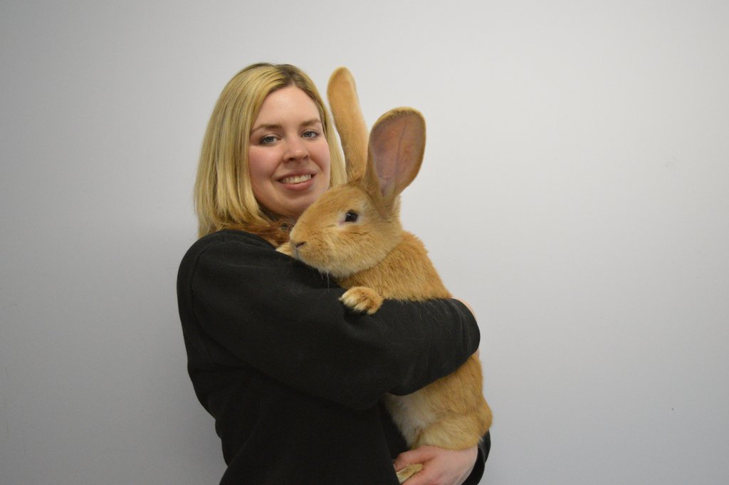 atlas giant rabbit spca