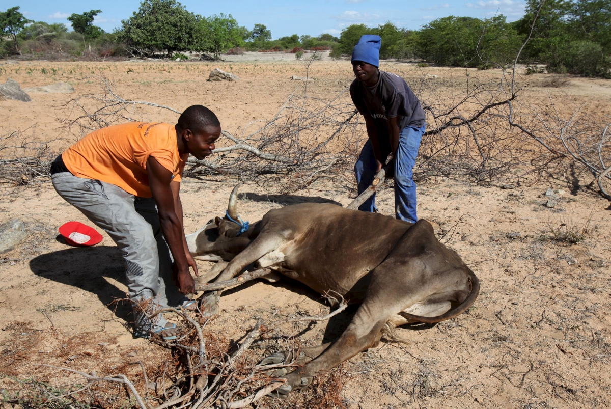 El Nino drought in Zimbabwe