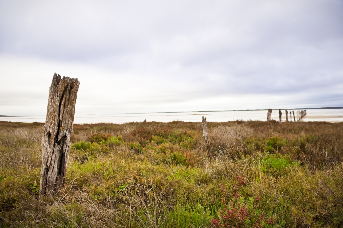 Backpakers kidnapped Coorong National Park