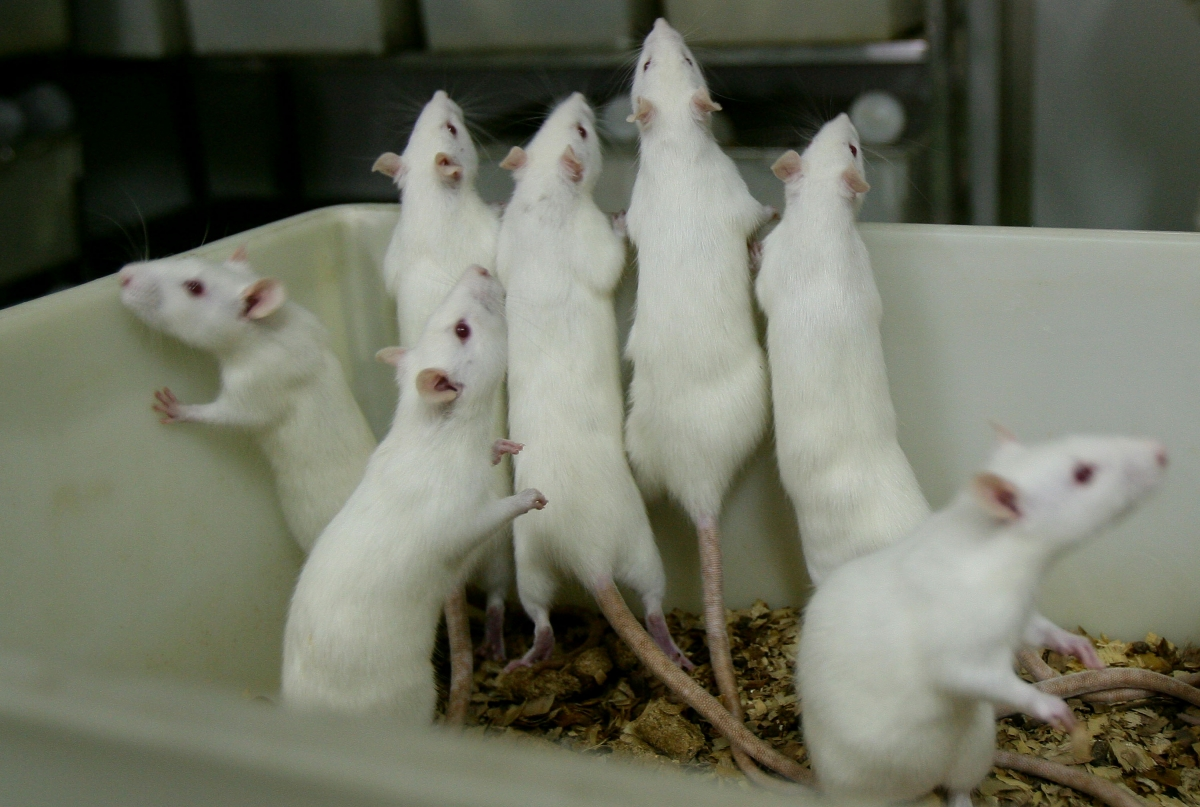 Testing on mice