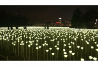 LED roses