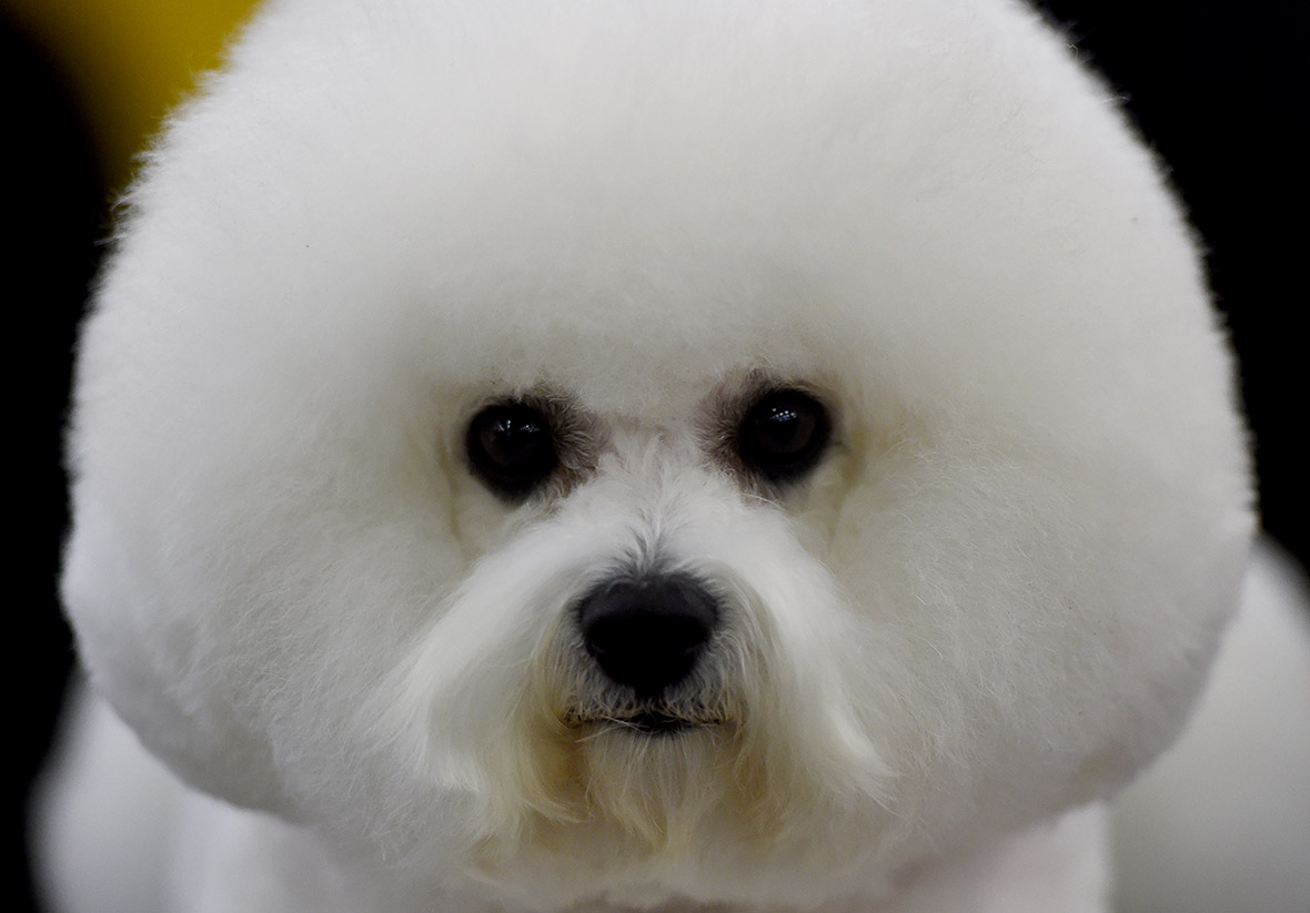The 140th Westminster Kennel Club Dog Show At Madison