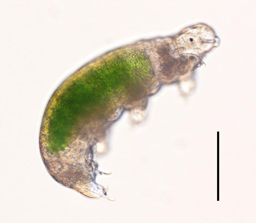 tardigrade survival frozen
