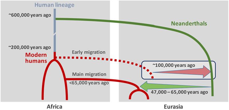 modern humans neanderthals