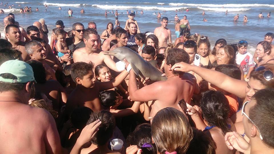 Dolphin selfie on beach