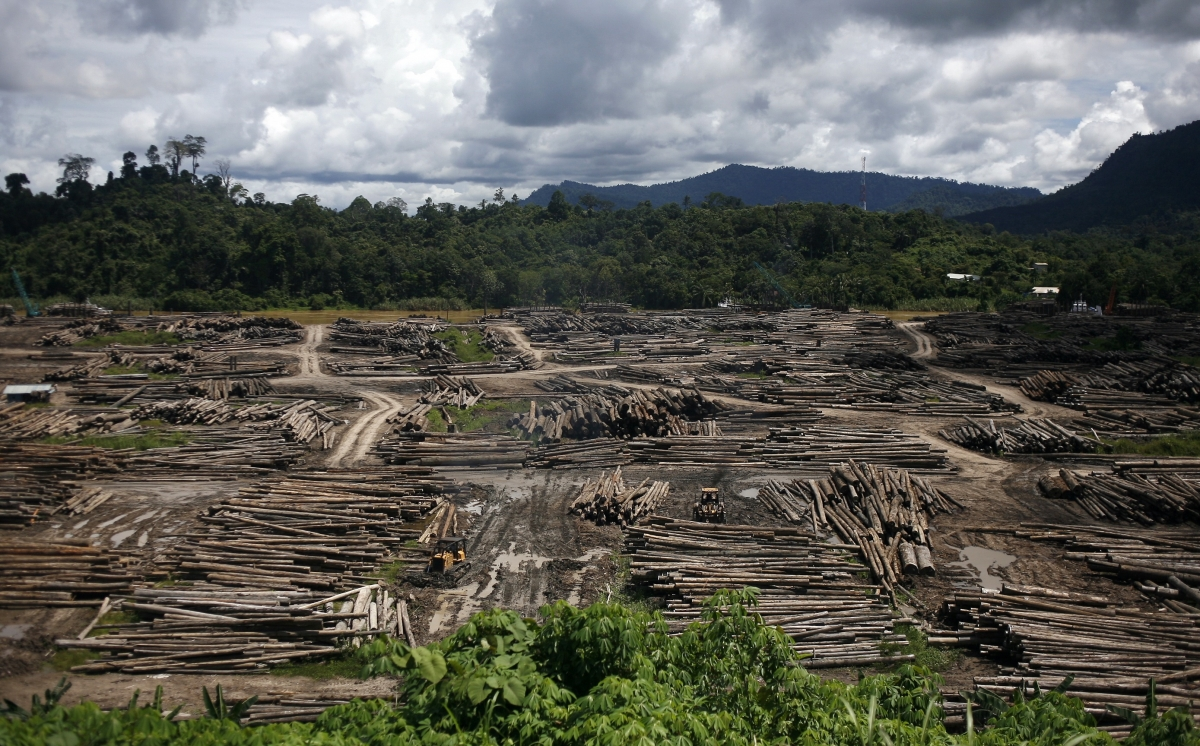Sarawak Malaysia logging