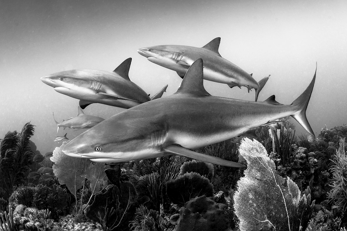 Underwater Photographer of the Year 2016