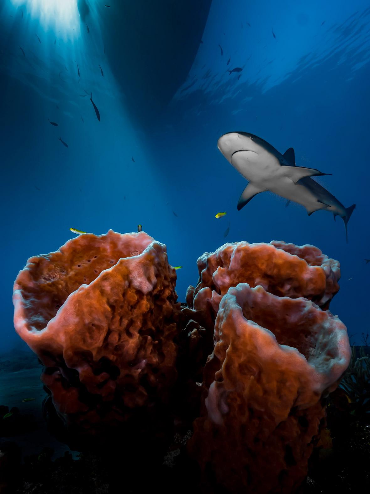 Underwater Photographer of the Year 2016