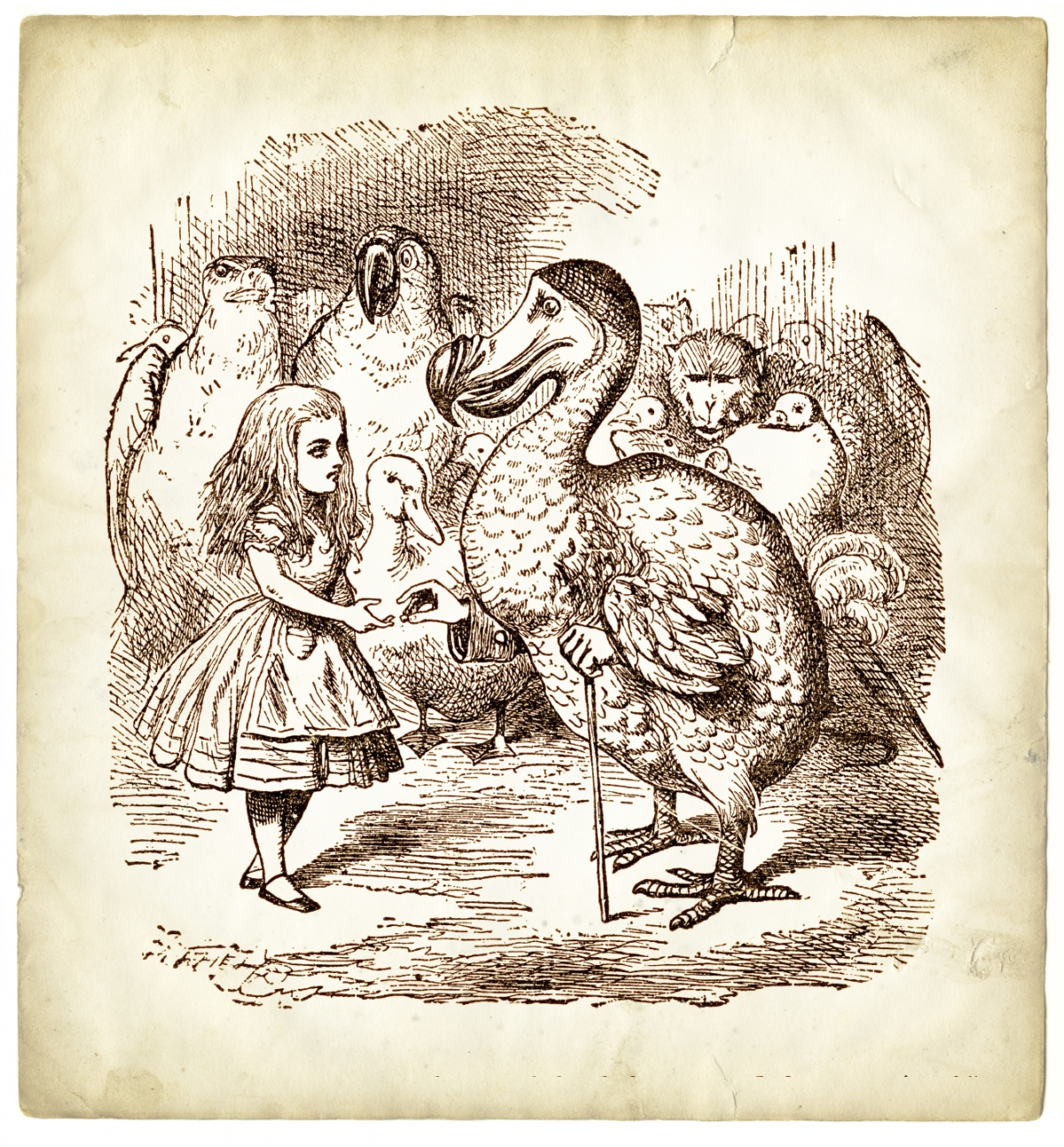 Alice and dodos
