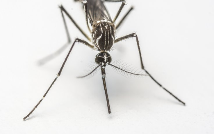 Google to combat Zika virus