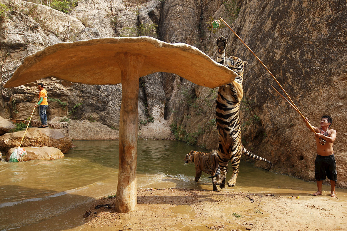 Tiger Temple