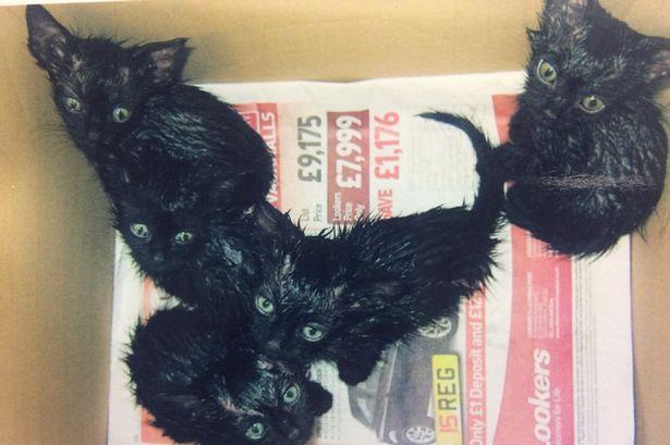 dumped cats