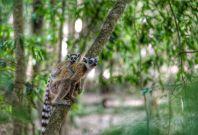 World Wildlife Day Ecotourism travel