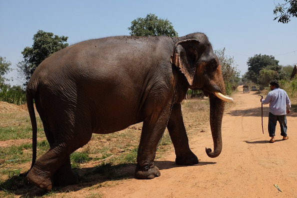 elephant wildlife day